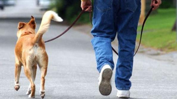 deiezioni cani